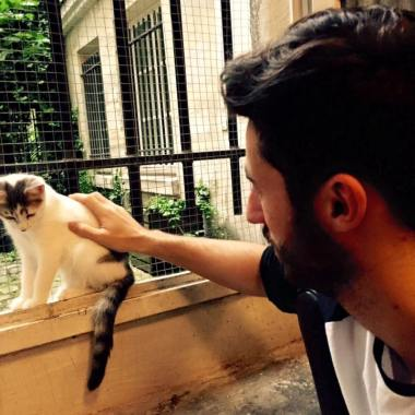 cat cafe 2