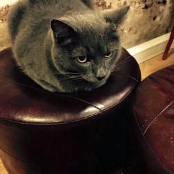 cat cafe 5