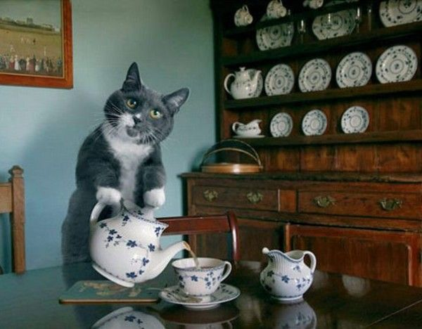 cattea_party
